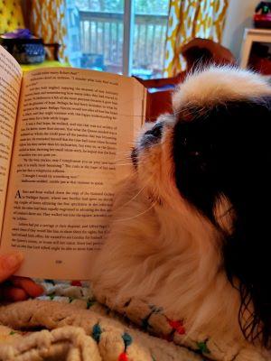 bernie with book